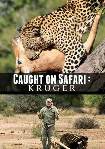 Caught on Safari